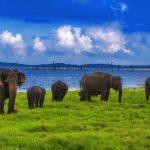 تور سریلانکا 24 دی