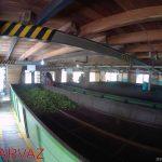 کارخانه چای سریلانکا